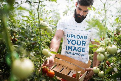 Tee Mockup of a Serious Man Harvesting Tomatoes 40366-r-el2
